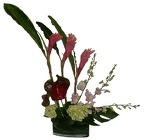 Hawaiian Tropics from Roses and More Florist in Dallas, TX