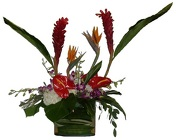 Polynesian Passion from Roses and More Florist in Dallas, TX