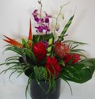 Isla Bella from Roses and More Florist in Dallas, TX