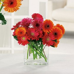 Charming Gerberas from Roses and More Florist in Dallas, TX