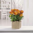 Woodland Mums Planter from Roses and More Florist in Dallas, TX