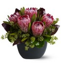 Positively Protea from Roses and More Florist in Dallas, TX