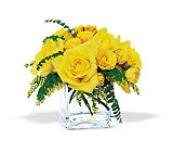 Yellow Rose Bravo! from Roses and More Florist in Dallas, TX